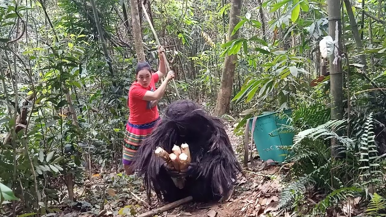 Strange Wildlife And The Battle For Food To Survival With Ethnic Girl | Monster like King Kong