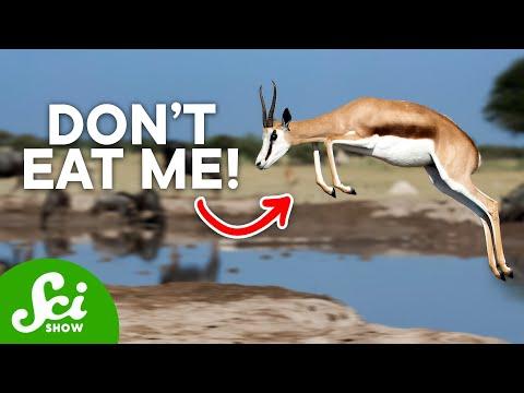 10 Bizarre Ways to Avoid Being Dinner