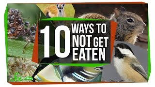 10 Bizarre Ways to Avoid Being Dinner
