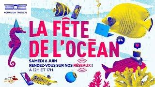 La Fête de l'océan - Samedi 6 juin - 2ème partie