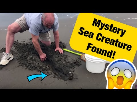 We Found A Mysterious Sea Creature in Long Beach Washington!
