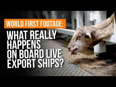 What REALLY happens on live export ships?