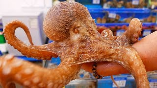 Korean Street Food - GIANT OCTOPUS Seoul Seafood