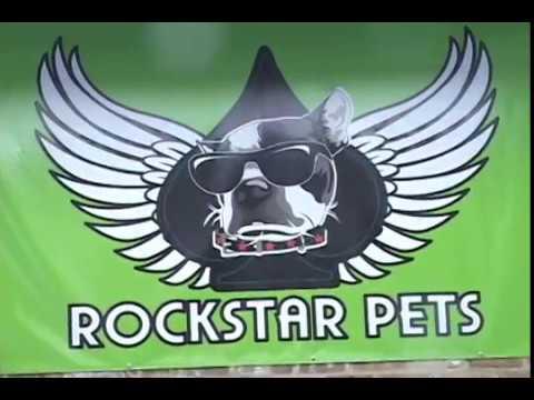 Rockstar Pets Video Tour