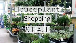 Houseplant Shopping at 7 Big Box Store Locations! | Home Depot, Lowe's, Walmart Indoor Plant Haul!