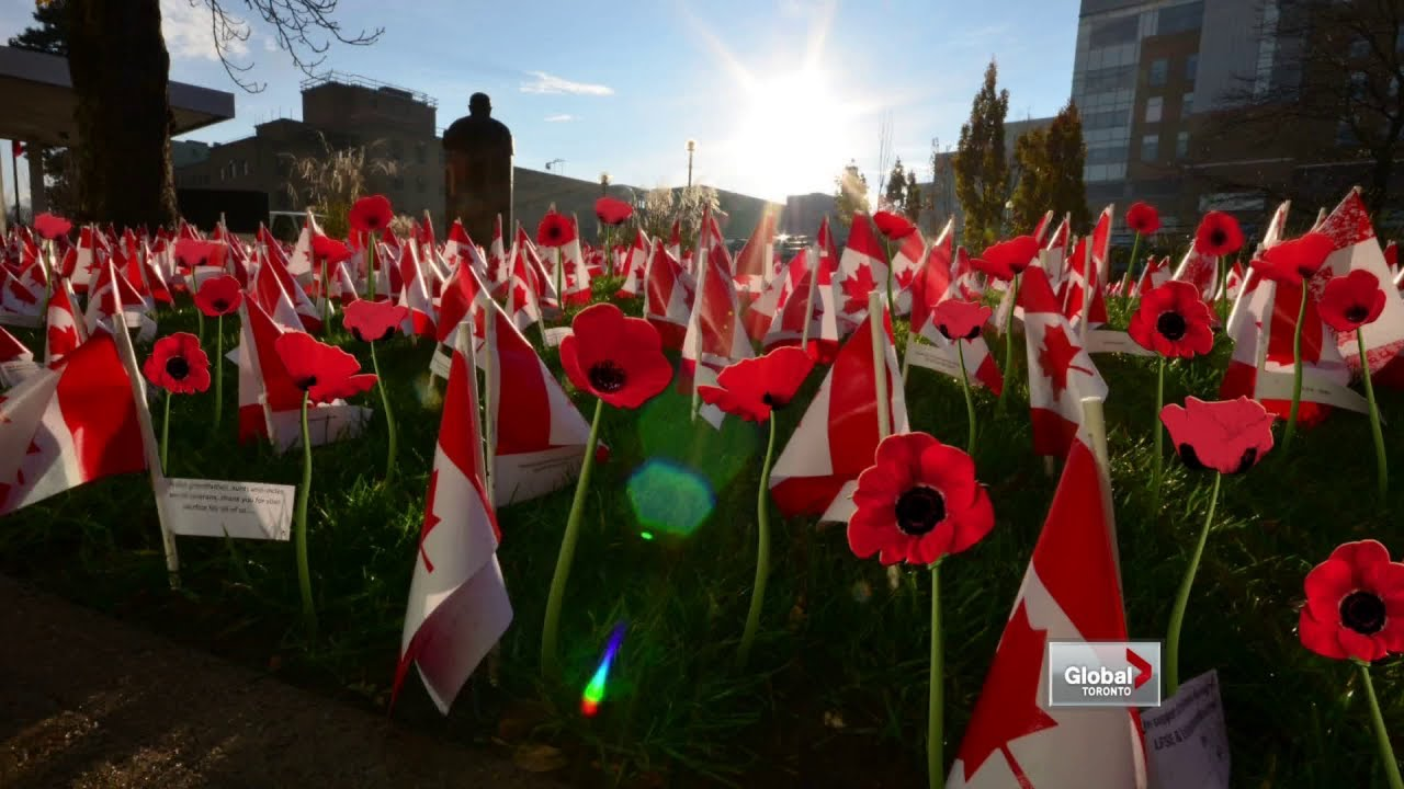 canadian flags cover veterans lawn on remembrance day youtube