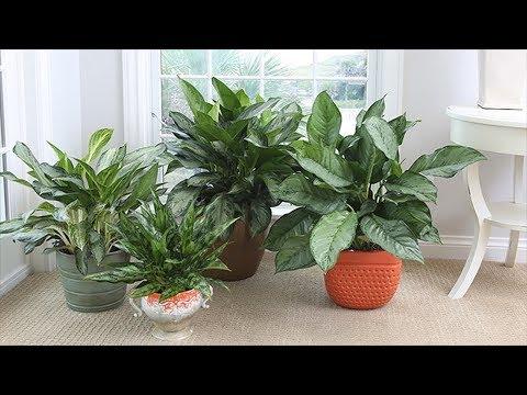 ОСЕНЬ для цветов. Как проветривать без сквозняков, как не навредить растениям?