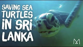 Sea Turtle Rescue Volunteer in Sri Lanka