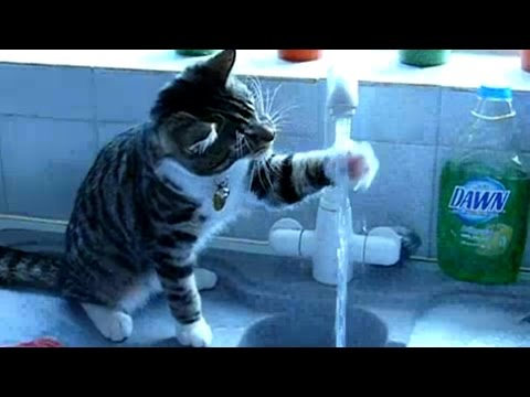 Funny Cats Drinking Water From Sink Compilation || AHF [HD]