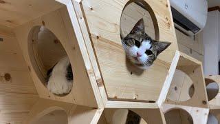 クスっと笑えるひのき猫短編集 Part11