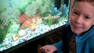 Запускаем золотых рыбок и данио в аквариум. Детское видео