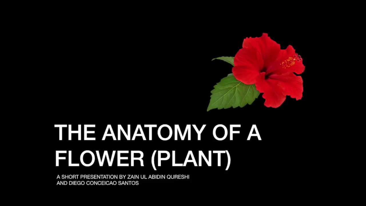 The Anatomy of a Flower (Plant) - YouTube