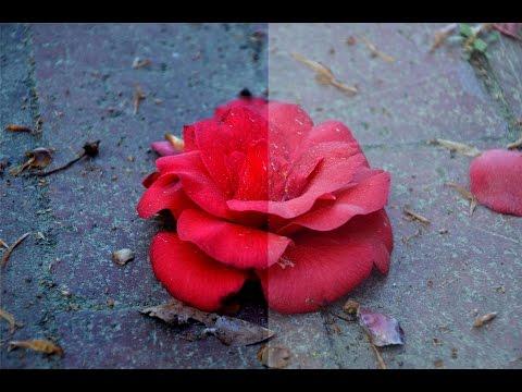 Photoshop Basic Editing Tutorial - Levels and Color Balance