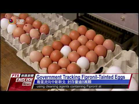 追毒雞蛋芬普尼流向 Government tracking Fipronil-Tainted eggs—英語新聞