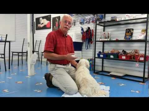 Calming Massage for Dogs from Dr Cam Day