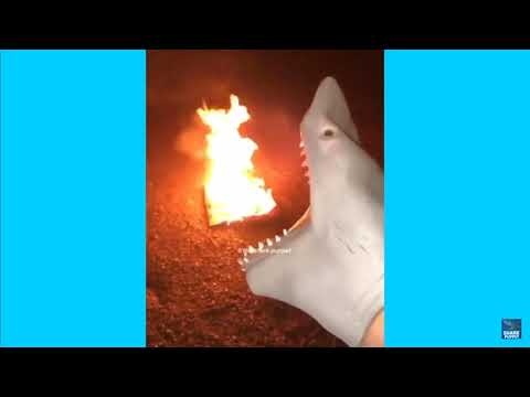 Shark Puppet Try Not To Laugh