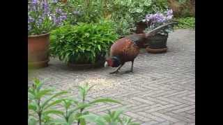 Vroege Vogels - Vreemde vogel in de tuin