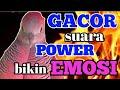 Perkutut Gacor Suara Power Bikin Lawan Auto Emosi  Mp3 - Mp4 Download