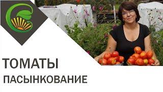 Надо ли пасынковать низкорослые томаты