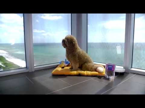 Pet-Friendly Hotel In Miami Beach Featuring PupJoy