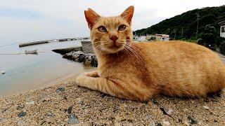 猫の海水浴!?猫島の砂浜へお出掛けする猫達