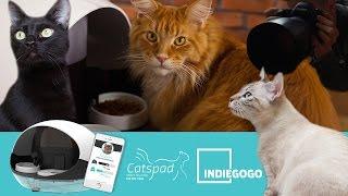 Catspad - Making of photo shoot