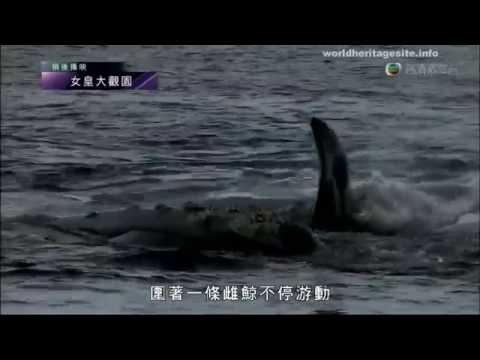 [Cantonese] Argentina world heritage Peninsula Valdes  阿根延世界遺產 瓦尔德斯半岛