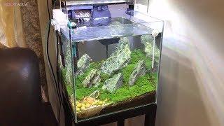 Hướng dẫn làm bể cá thủy sinh bố cục đá Iwagumi cực đẹp