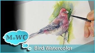 Bird Painting With Wet in Wet Watercolor Underpainting Technique
