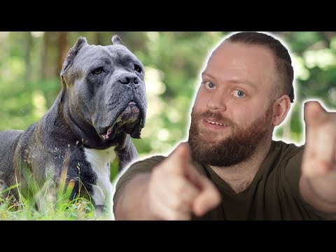 What's the BEST Guard Dog Breed FOR YOU! #10
