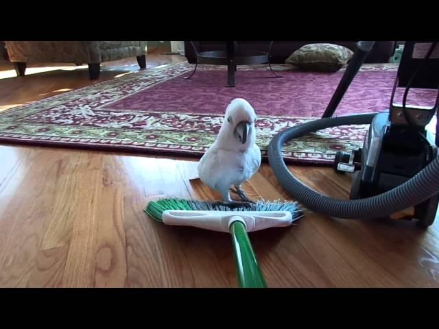 2014 1 26 Mr Darcy rides the broom