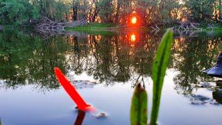 ТОЛЬКО ЗАКИНУ поплавок И СРАЗУ ПОТАЩИЛА  рыбалка на маховую удочку