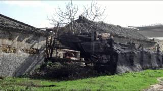Gracia Montes : Fandangos de Huelva y verdiales