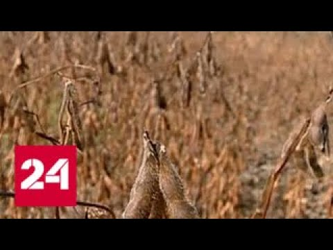 Кымдан 2 Инъекция купить - YouTube