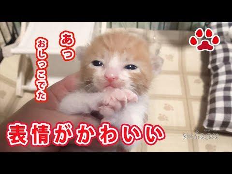 仔猫まや おしっこが出た時の表情がかわいい The expression when the kitten May is peeing  is cute