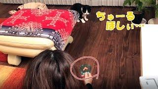 ビビリ猫がちゅーるに釣られ、お礼におもてなしスキルを発動!!