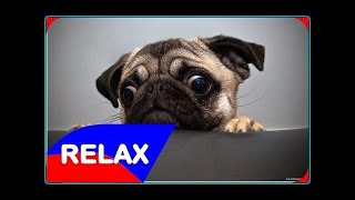 Funny Dogs and Cats Animals Compilation #1