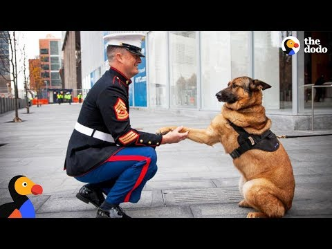 Soldiers Come Home To Dogs Compilation & More: Memorial Day 2017 | The Dodo Daily