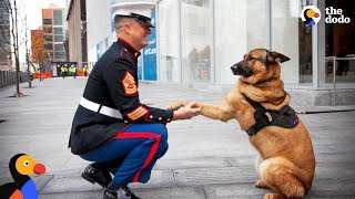 Soldiers Come Home To Dogs Compilation & More | The Dodo Best Of thumbnail