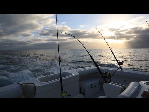 Southern California Marlin Fishing & Conservation