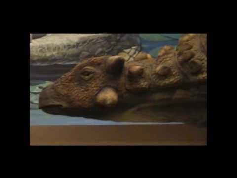 Fernbank Natural History Museum - Atlanta GA