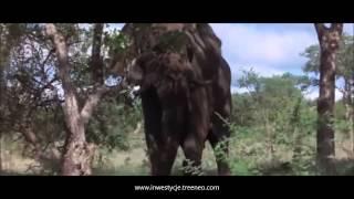 TREENEO - zwierzęta i Amarula