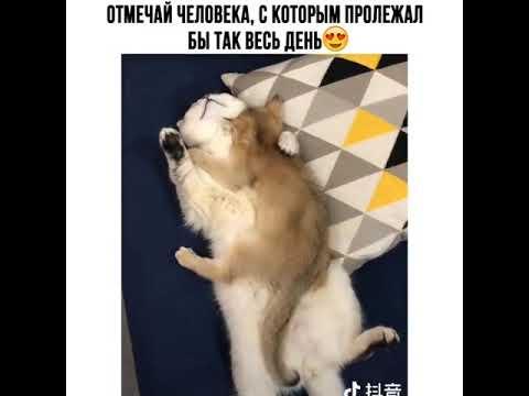Видео Приколы Юмор Фэйлы Смех Ржака Fail Funny Vines 147
