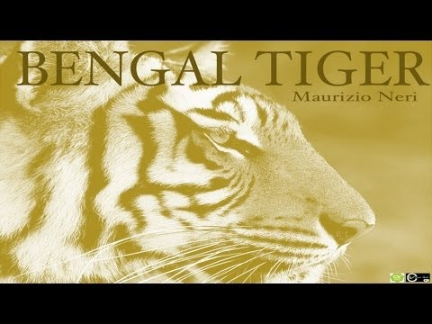 MAURIZIO NERI - BENGAL TIGER