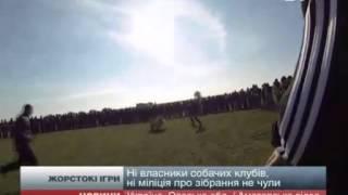 Собачьи бои в Татарбунарах