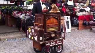 30. listopadu 2014. Organ Grinder ,Organillero en Alemania!
