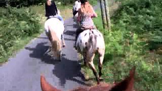 Balade a cheval 1 h. 2 ° part.