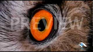 Animal Eyes Quiz #1