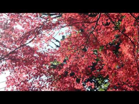 live in tokyo japan nerima-ku syakujii Park 紅葉1050323