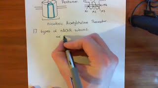 Introduction to Nicotinic Acetylcholine Receptors Part 1